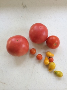 Tomatoes from my garden box.
