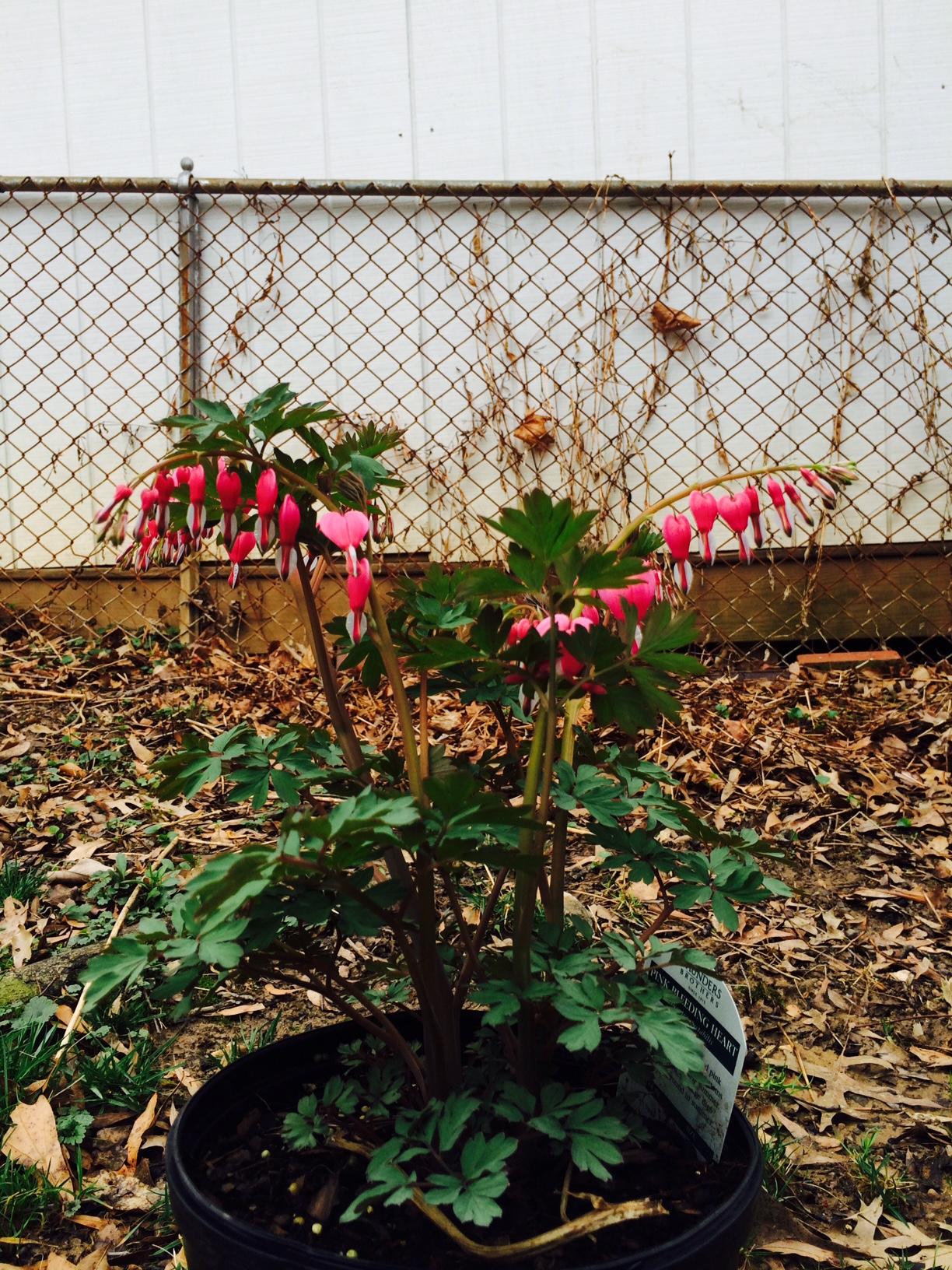 April | 2015 | Marie Flanigan\'s Blog